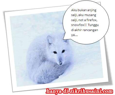 snow fox, gambar musang, musang salji, firefox,